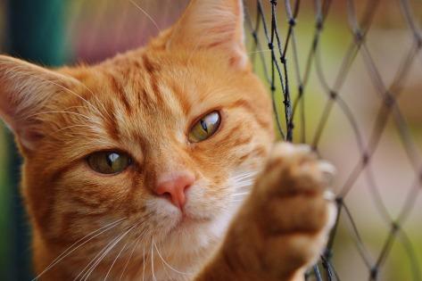 cat-1044750_1920