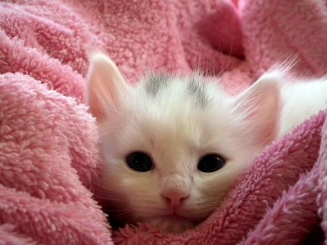 kitten-227009_1920